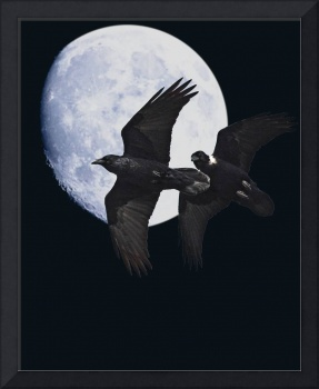 Ravens of the Night