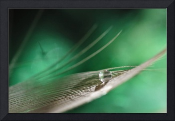 Feather (Green Balance)