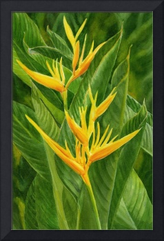 Yellow Orange Heliconia with Leaves