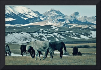 Horses on the Rocky Mountain Front
