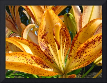 Lily Flower art print Fine Art Photography