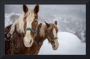 Snow Frosted Horses