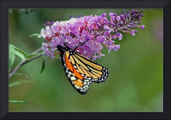 Butterfly  Monarch  paint