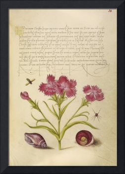 Joris Hoefnagel~Insect, Sweet William, Spider, Mar