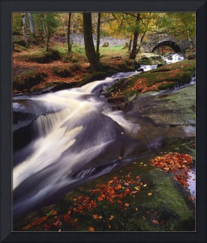 Creek In Woods In Autumn, Sally Gap, County Wicklo