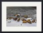 Rocks, Snow and Ice by D. Brent Walton