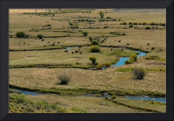 Cattle Country Landscape