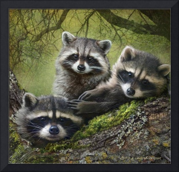 raccoons as art