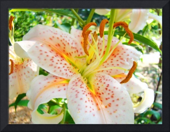 Awesome Orange Lily Flowers Floral Garden art prin