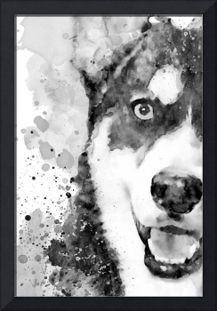 Black And White Half Faced Husky Dog