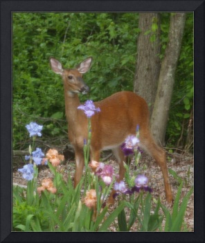A Deer Poses In Front Of Violet Flowers
