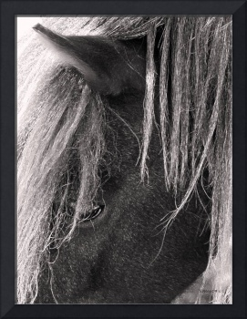 Theia ~ Miniature Horse
