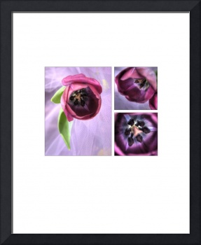 Tulip Storyboard Collage