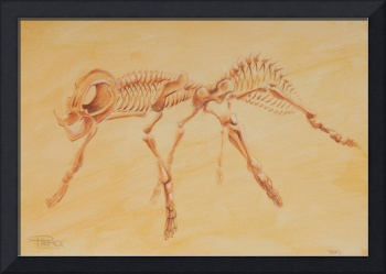 Ant Skeleton