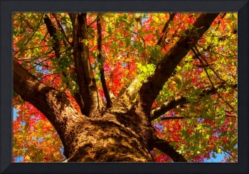 Colorful Autumn Abstract