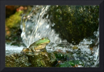 Frog on waterfall