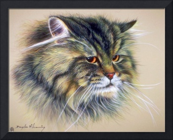 Tabby Long-Hair Pet Cat