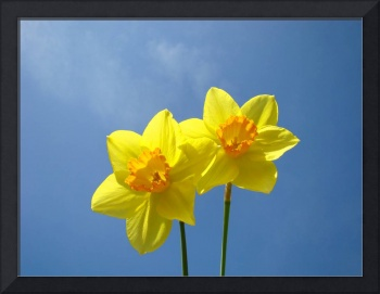 Spring Blue Sky art prints Daffodil Flowers Decora
