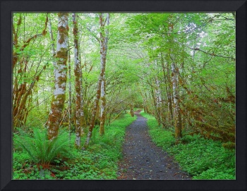 Trails Leading To Beauty - Olympic National Park