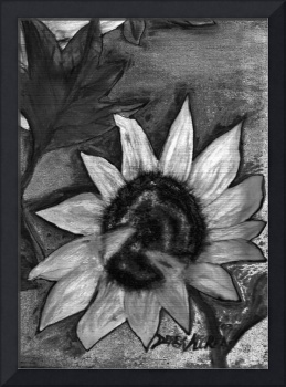 oil sunflower black and white oil digital