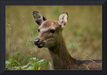 Roe deer in this forest