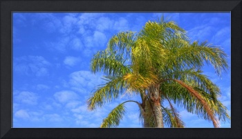 Palm Tree on Palm Island