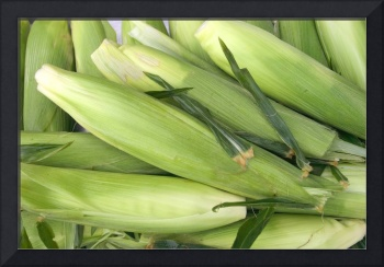 Bunch of corn in husk