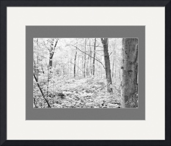 Summer Morning in the Sacred Grove (infrared) by D. Brent Walton