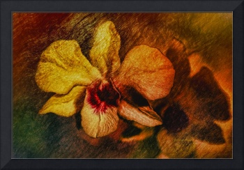 Mood of the Orchid