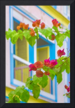 Colored Flowers in Front ot Windows House Print