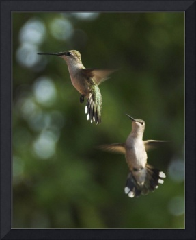 Two of a Kind Hummingbirds