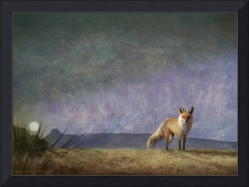 desert fox by moonlight