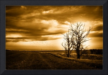 Two Trees Sepia Fields