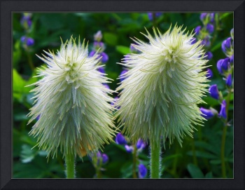 Photography Art Flowers Of The Garden Of Nature