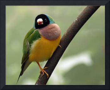 Green And Yellow Bird