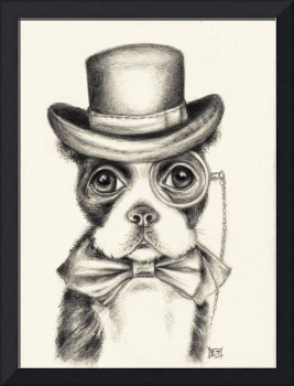 Mr Boston Terrier