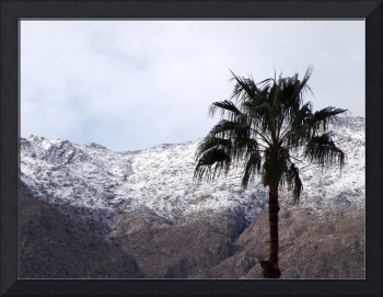 Palm in Snow