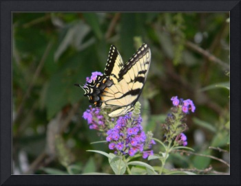 Butterfly Haven 353