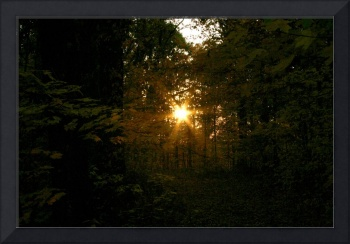 sunset deep in the woods