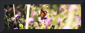 Perhaps this is the moment butterfly long image