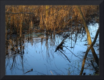 Reflections on a Slough