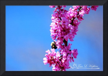 Bumble Bee 20120405_66a