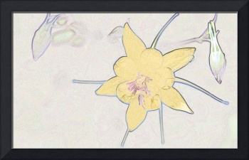 Yellow Columbine with 2 Buds Reimagined