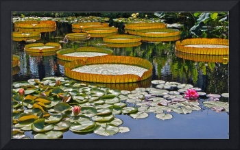 Waterlilies All -- version 2