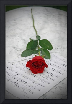 Classical Romantic Rose Concerto