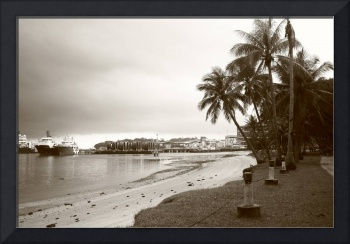 monochrome nature, tropic coconut tree, Singapore
