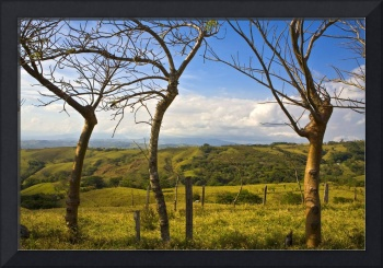 Three Leafless Trees, Costa Rica