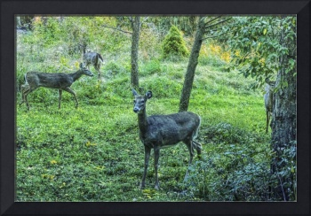 Four Deer In The Forest