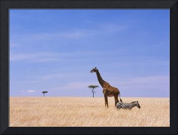 Giraffe Standing In Dry Grass On The Plains Of The