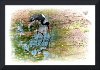 Saddle-Billed Stork Paintograph